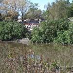 Del otro lado del puente sobre Propios, la Intendencia aún no implementó el mantenimiento de los taludes.
