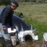 El biodigestor se carga con una parte de bosta y cuatro de agua.