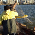 Aquella fría mañana de abril, en que el equipo de Producción Nacional en Tevé Ciudad fue a hacer el programa, la pesca fue inusual.