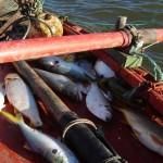 """""""Hace años que no tenemos una buena pesca"""", sostienen los pescadores."""