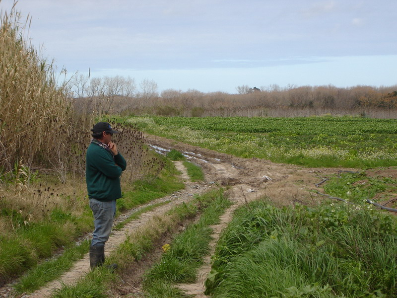 Montevideo rural 81 vivero fachin producci n nacional for Viveros en uruguay